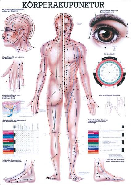 Lehrtafel - Körperakupunktur - 24 x 34