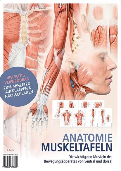 Lehrtafeln - Anatomie Muskeltafeln - Faltposter
